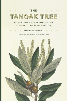 The Tanoak Tree